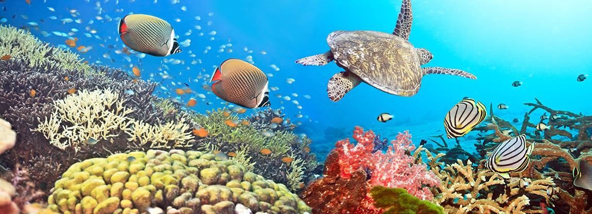 La scogliera corallina: partnership tra l'Università degli Studi di Milano-Bicocca e le Maldive per salvarla